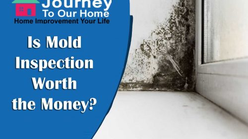 Is Mold Inspection Worth the Money